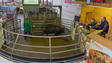 Restrictions: Ringside at Mohill Mart in Co Leitrim. Photo: Gerry Faughnan