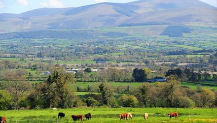 Forestry, grassland and hedges all sequester carbon, John Hourigan points out