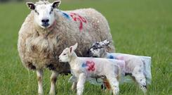 Defra said a 'widespread cull' was not something that the Government was planning for (Owen Humphreys/PA)
