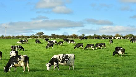 As it stands, around 3pc of Irish farms (4,200 of an estimated 137,500 farms) are registered as companies; the rest are classified as family farms.