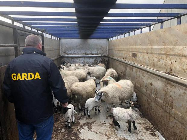 A number of farmers have reported sheep missing in a number of areas across Donegal in recent weeks. Picture: Donegal Gardai