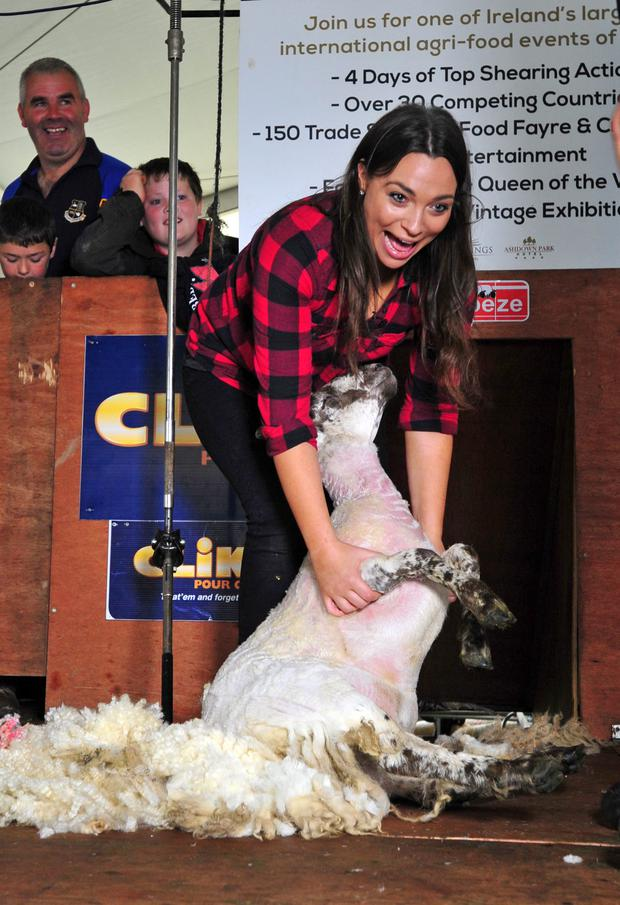 Caitlin McBride from Independent.ie shears a sheep for the first time at the National Ploughing Championships back in 2013