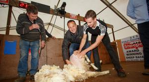 Sheep shearing co-ordinator George Graham watches on as Minister for Social Protection Leo Varadkar shears under supervision from sheep shearing world record holder Ivan Scott