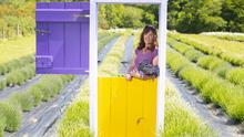 Moira Harte, owner/manager of Wexford Lavender Farm, Inch, Co Wexford