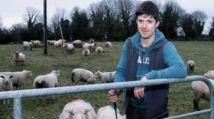 With the ewes due to start lambing in three weeks, Gavin hopes most will be finished by mid April. Photo: Hany Marzouk