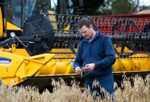 Chris Sweetman checks the quality of spring oats as he harvests on his farm in Clonard, Balbriggan, Co Dublin. Photo: Damien Eagers