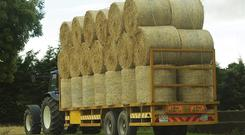 Straw bales (4x4) are now fetching €30 each - a near doubling of the €17 price many farmers obtained straw for in 2017. Photo O'Gorman Photography.