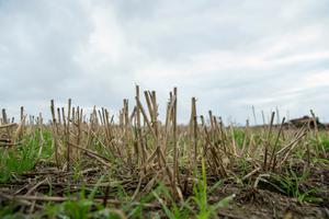 250 grain farmers have suffered losses running into the millions, according to the IFA