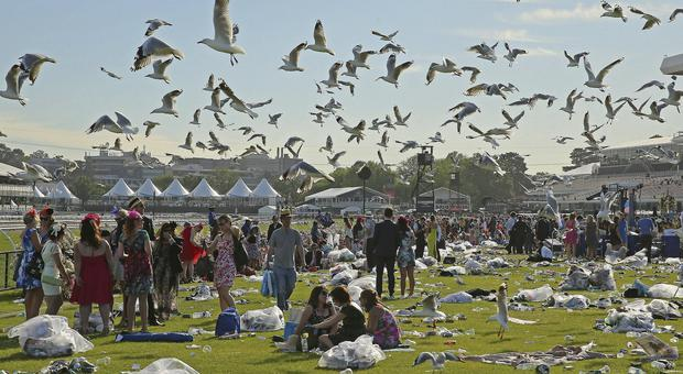 Good times under threat: Seagulls hover overhead as racegoers make their way home after attending Melbourne Cup Day at Flemington Racecourse last month