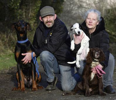 RESCUERS: Remi and Helena Le Mahieu of Ash with Doberman Brandy, Chloe the Spaniel and a Collie pup. Photo: Tony Gavin