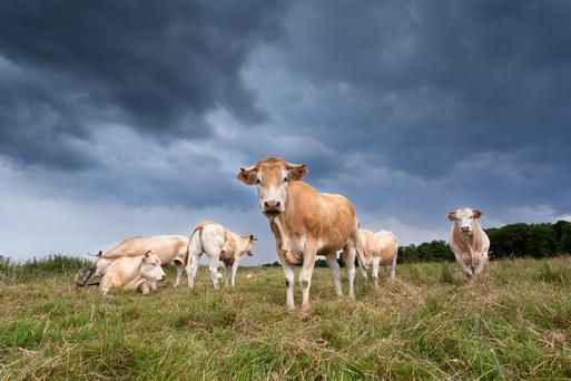 Will shareholders in dairy sector companies such as Kerry Group, Glanbia and Donegal Investment Group get the cream, or be left with less palatable rewards? Currency fluctuations and concerns over growth could sour investments. Stock image