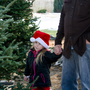 Go fir it: Families can have a lovely experience travelling to a Christmas tree farm