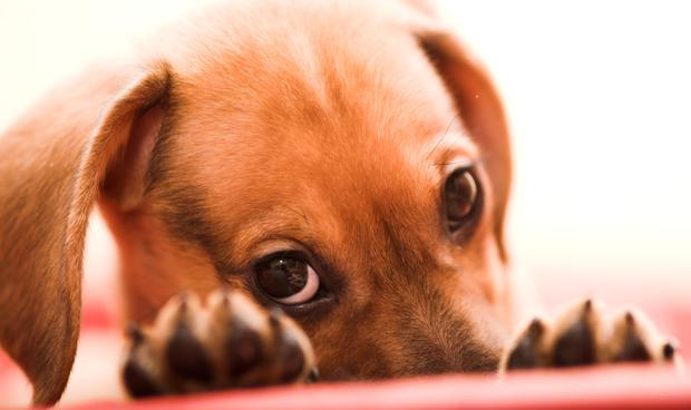Paws for thought: It costs up to €2,500 a year to home a dog. Stock image