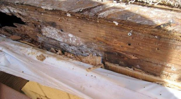 Dry rot may affect getting a mortgage