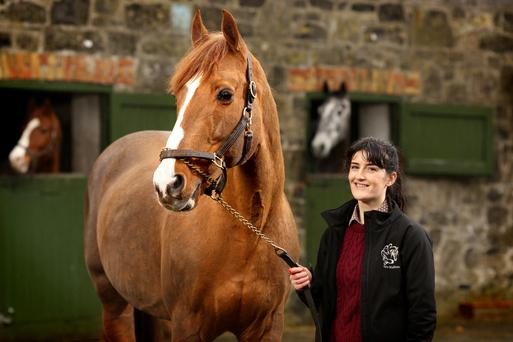 'Hopefully I will work with horses for the rest of my life. I never tire of their company,' says Emma Rose Conway of Eurostallions. Photo: Gerry Mooney