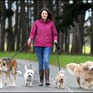 Eimear Hogg goes out for a stroll with Patrick, Rosie, Jake and Lola. Photo: Steve Humphreys