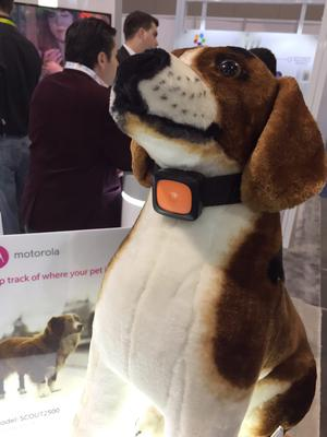 The Scout5000 smart dog collar from Motorola enables owners to track the physical health of their pet and has a built-in camera.