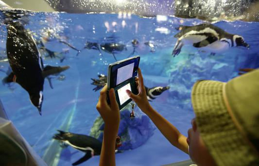 A boy uses a Nintendo 3DS to take a photograph of penguins at an aquarium in Tokyo.