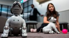 The technology's a bit, well, ruff when it comes to robot dogs like Aibo in Berlin