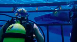 Great fright: 47 Metres Down has some clever twists and turns