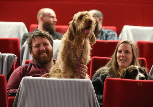 Everyone's a critic: Tomas and Louisa Fox from Dunshauglin, Co Meath with their dogs Strudel (centre) and Pesto at the Light House Cinema's 'dog-friendly' screening of the new Wes Anderson film, Isle of Dogs. Photo: Damien Eagers