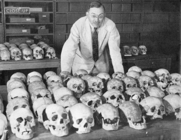 In search of a 'pure' race: American anthropologist Earnest Albert Hooton at Harvard University in 1939 standing with trays of skulls used in his research on evolution