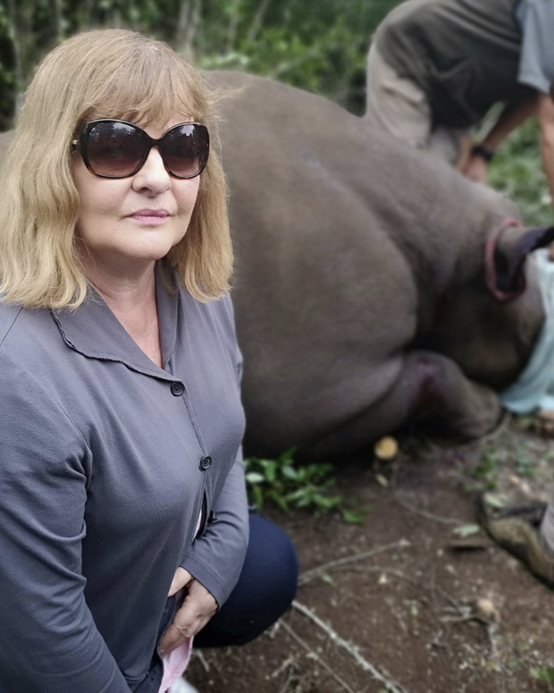 Eleanor and a heavily sedated rhino