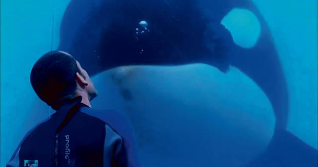 Sealife: Film explores the ethics of keeping whales in captivity