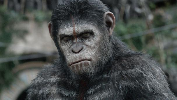 Andy Serkis plays Caesar, the leader of the apes, in Dawn Of The Planet Of The Apes