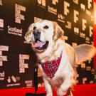 The Isle of Dogs launched this year's Glasgow Film Festival (Eoin Carey/GFF/PA)