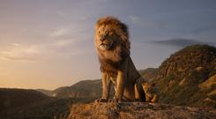 CGI rendering: The Lion King