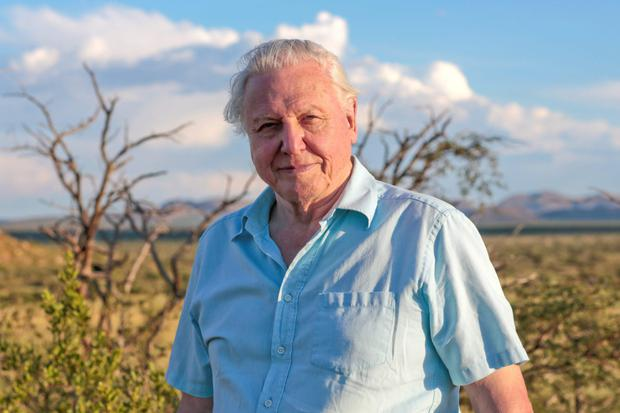 David Attenborough in Planet Earth II