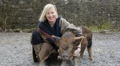 In clover: Cathy Davey with Arnold the pig at the rescue centre. Photo: Tony Gavin