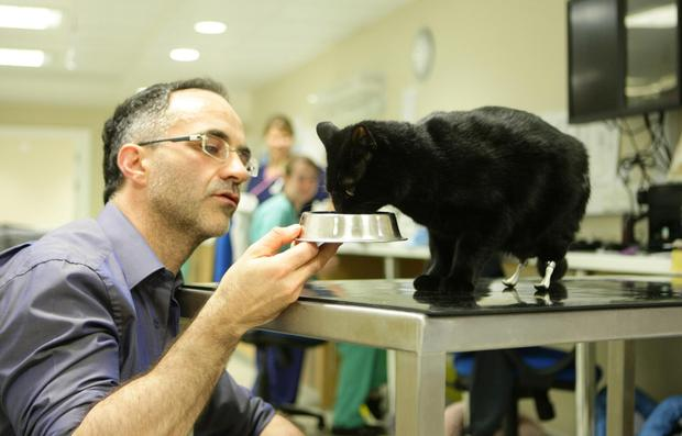 Vet Noel Fitzpatrick with Oscar the cat, who was given two prosthetic paws in 2011