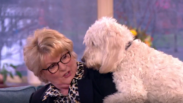 'Was that on TV?' Brenda Blethyn mounted by her dog on This Morning (ITV grab)