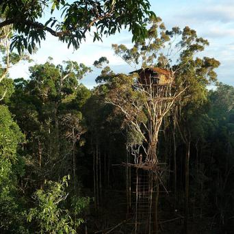 Wibbly-wobbly wonder: Members of the Korowai tribe said the treehouse was built for 'the benefit of overseas programme makers'
