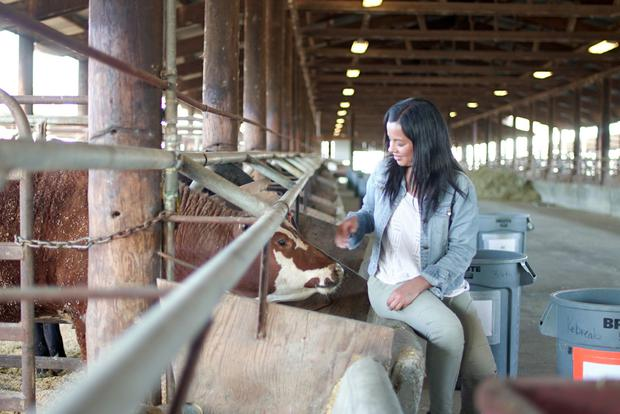 Aghast: Liz Bonnin with cows going through a seaweed feed trial in California on Meat: A Threat to Our Planet?