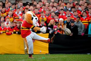 CBC Monkstown mascot 'Beef' kicks a penalty as he entertains the crowd at half-time