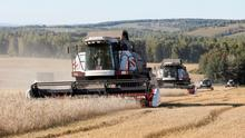 """Combines harvest wheat and oats in a field owned by the """"Siberia"""" farming company outside the village of Ogur in Krasnoyarsk Region, Russia. REUTERS/Ilya Naymushin/File Photo"""