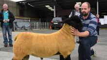 Denis Taylor with Seamus Browne's ram, winner of the Recorded Class at the Suffolk Society Premier Show and Sale, on of the progeny of Lakeview Heart of Gold.