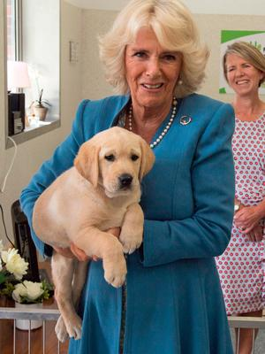 The Duchess of Cornwall holds an 8 week old Labrador puppy named Gretel during her visit the National Guide Dogs Training Centre in Cork