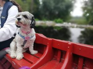 """Teresa Regan's favourite staycation trip was a mystery tour beginning with a boat trip on the River Barrow, """"organised by my husband Tom for me, our daughter Rachel and beautiful dog Bonnie...  Love these staycation days; they are like a photo album to which we can return time and again."""""""