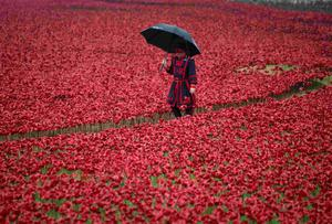 "A Yeoman Warder walks through ceramic poppies that form part of the art installation ""Blood Swept Lands and Seas of Red"" at the Tower of London. The evolving art installation will be completed on November 11 when the 888,246th poppy will be planted. Each poppy represents a soldier killed during the First World War. REUTERS/Peter Nicholls"