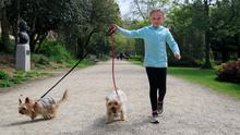 Social distancing: Zoe O'Connor (5) walking her dogs Buster and Lucy in Merrion Square, Dublin. Photo: Gareth Chaney/Collins