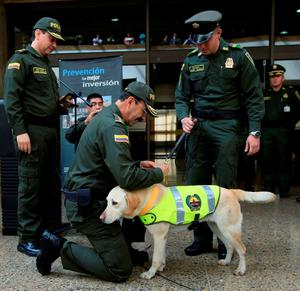 Colombia's police chief General Rodolfo Palomino decorates Mona, a Colombian drug-sniffing dog, after it aided in the confiscation of packs of cocaine in  Bogota, Colombia, September 7, 2015. Police in Colombia and Mexico have seized more than two tonnes of cocaine after a drug-sniffing dog alerted authorities in Bogota to the narcotics, which had been dyed black and falsely registered as an ingredient in printer cartridges, the Colombian police said on Monday. REUTERS/ John Vizcaino
