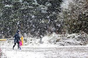 Snow falling in Co Clare today (Photo: Arthur Ellis Photography)