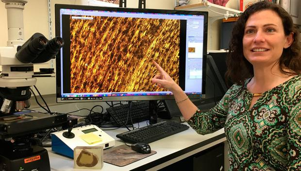 Dr Holly Woodward analysing the bone tissue microstructures of T-rex fossils. Photo: Holly Woodward/Science Advances/PA Wire