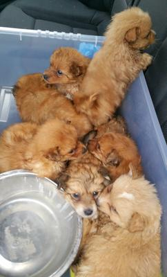 The pups, which were too young to be taken from mother