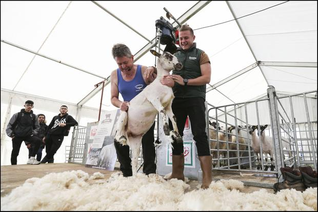 Sheep shearer George Graham showing Mícheál  Ó Scannail his craft at National Ploughing Championships in Fenadh Co Carlow. Picture by David Conachy