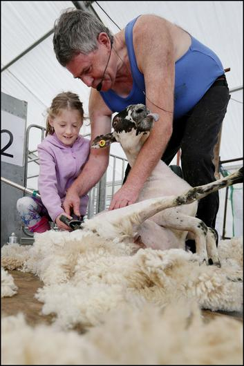 Sheep shearer George Grahan showing Aisling Murphy (8) from Ennis, Co Clare his craft at National Ploughing Championships in Fenadh Co Carlow. Picture: David Conachy